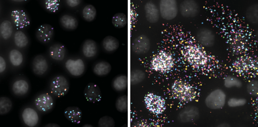 Influenza gene segments visualized in cells during replication. The cell nuclei are in grey and the influenza gene segments are labeled as dots with a particular color.