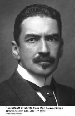 Hans von Euler-Chelpin received the 1929 Nobel Prize in Chemistry