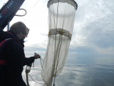 Plankton studies to understand the Baltic Sea food web