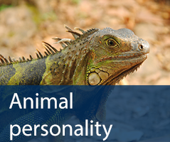 Animal personality test