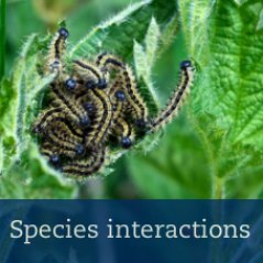 species interactions button