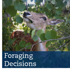 foraging decisions