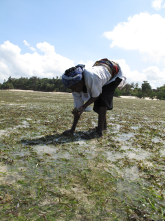 Women fishing for shells in the seagrass, Tanzania, photo by Lina Mtwana Nordlund.