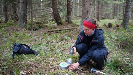 Installing the temperature data logger in field. Photo: Lina Widenfalk