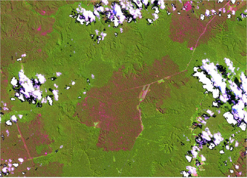 Landsat 8 OLI image retrieving kilometres of burned forests spread across old-growth forests in Amaz