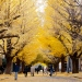 University of Tokyo fall campus