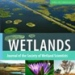 wetlands icon