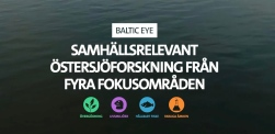 Baltic Eye webbpuff stor sv
