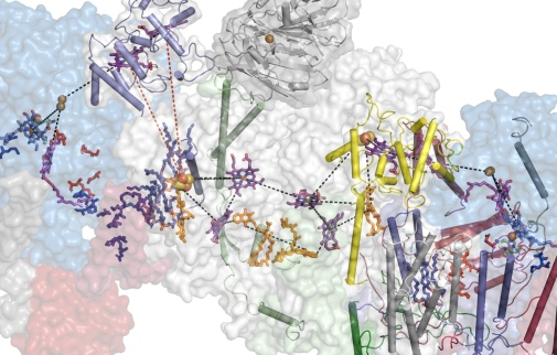 Respiratory supercomplex from Mycobacterium smegmatis