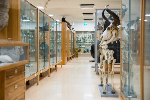 Zoologiska studiesamlingen