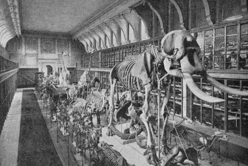 Swedish Museum of Natural History, the collection of mammals at Westman Palace 1897.