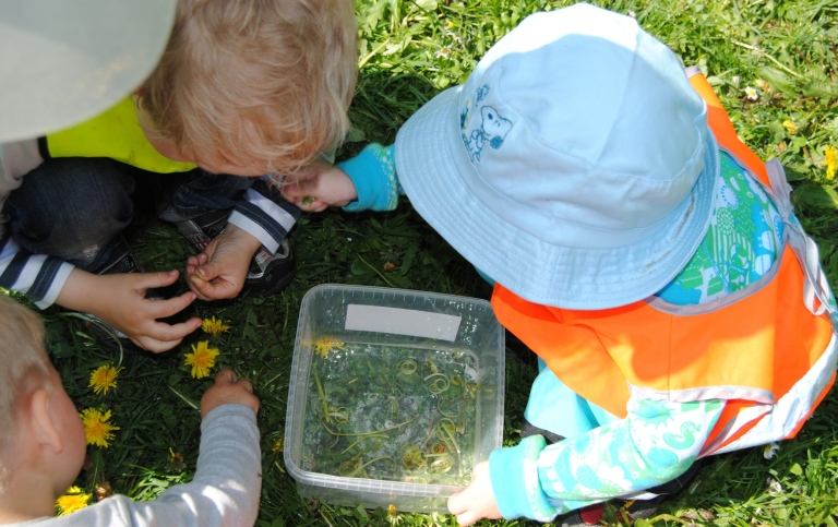 Children puting dandelions into a plastic can with water