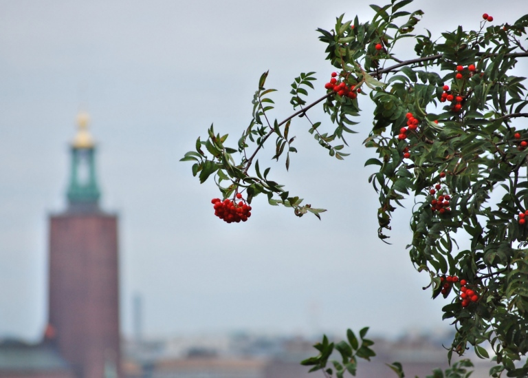 View of Stockholm City Hall