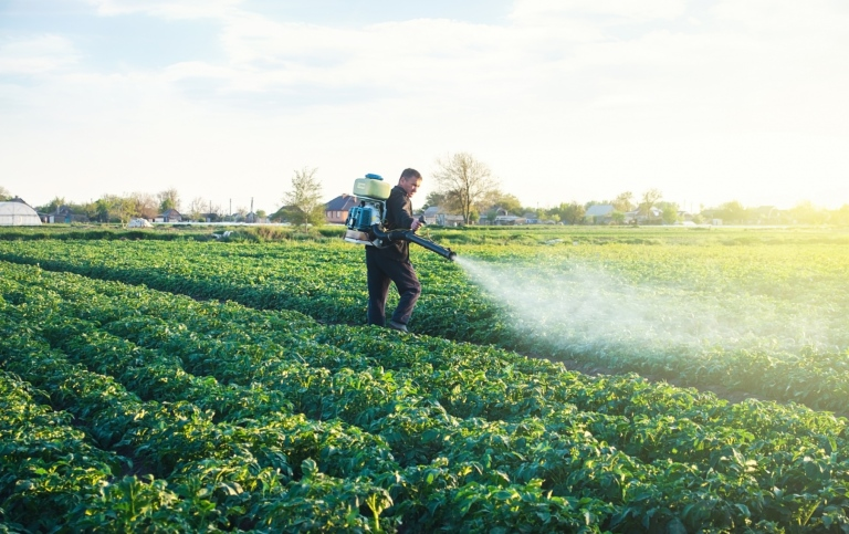 A farmer sprays a solution of copper sulfate on plants of potato bushes.