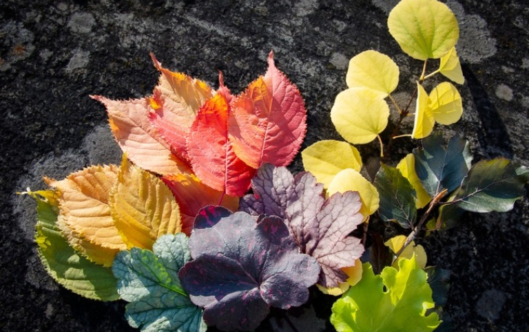Colourful autumn leaves. Photo: Ingmarie Andersson