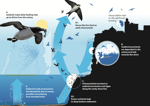 Nutrients from isheating seabirds to the seabed and up in the sky