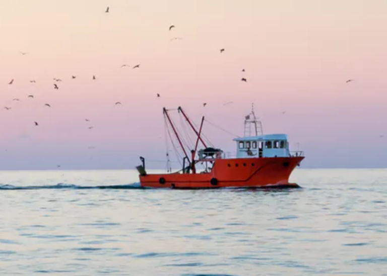 Article about overfishing in The Conversation. Photo: Artem Mishukov/Shutterstock