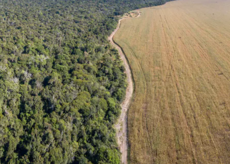 The Amazon rainforest meets soybean fields in Mato Grosso, Brazil. Photo: Paralaxis/Shutterstock