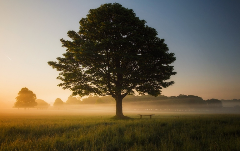 Tree in the middle of a meadow. Photo: Simon Wilkes/Unsplashh