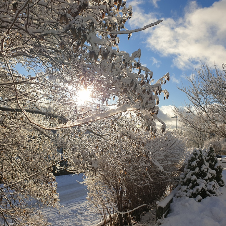 sun light through vegetation covered with snow