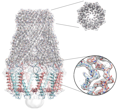 Molecular structure creates new possibilities to combat antibiotic resistance