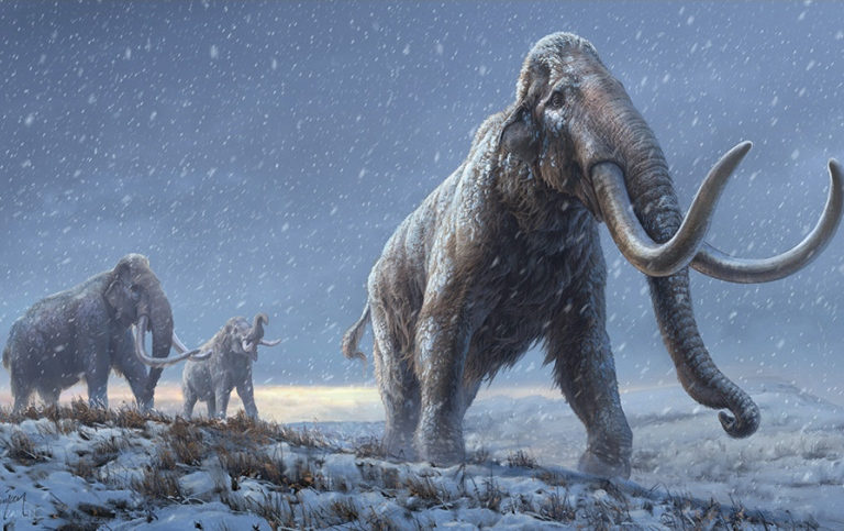 The illustration represents a reconstruction of the steppe mammoths that preceded the woollymammoth