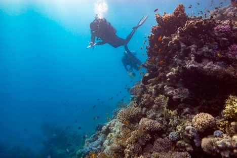 Divers conduct research on thriving coral reef in Saudi Arabia