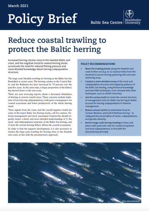 First page of the policy brief. Illustrating a herring school. Photo: Tobias Dahlin/Azote