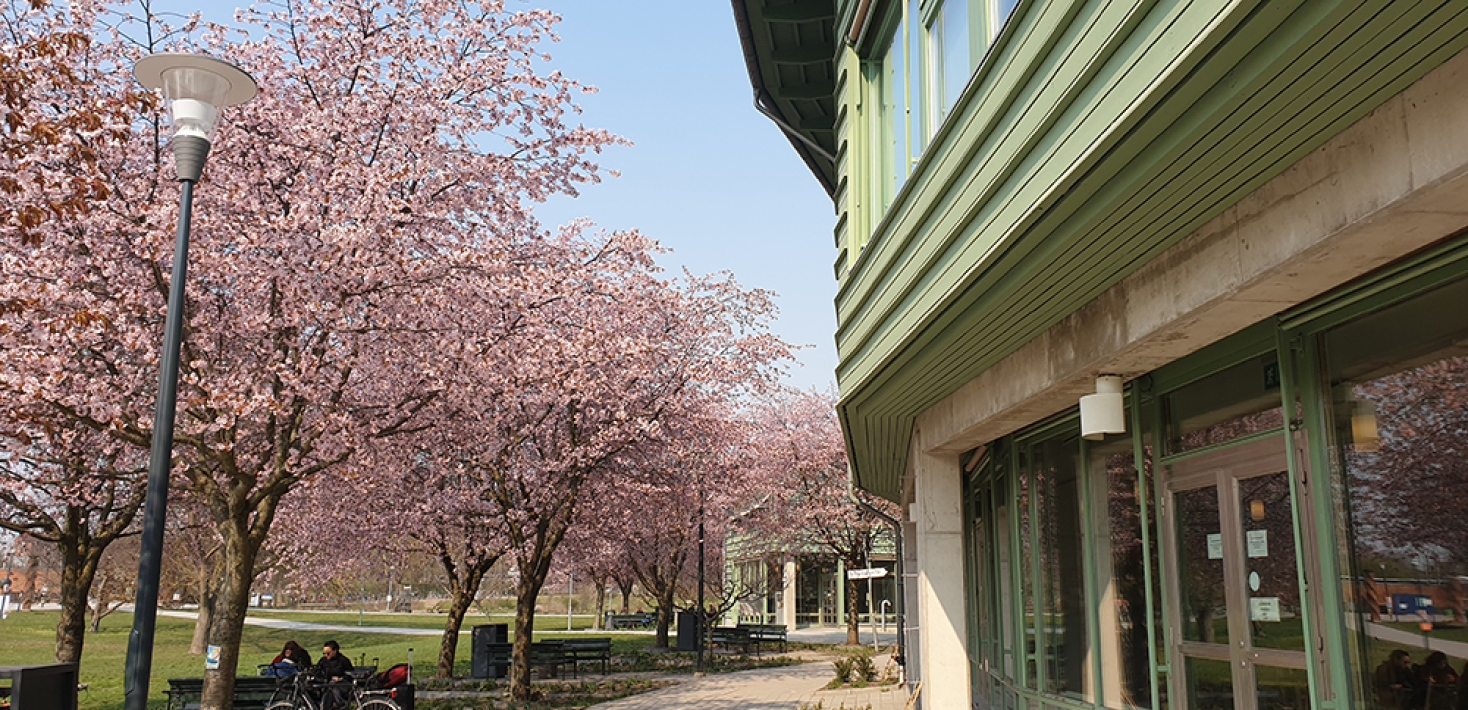 part of the Geoscience building, stockholm university, cherry blossom trees