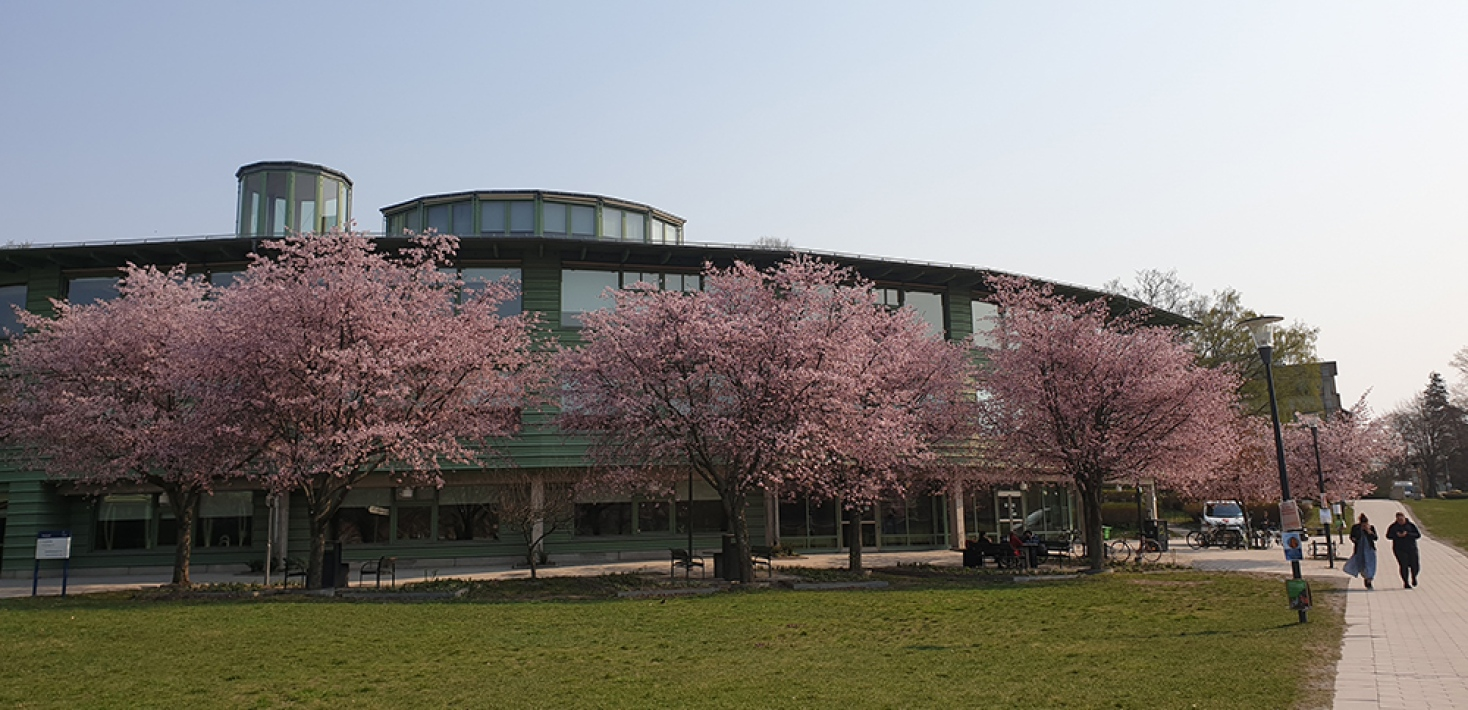 Geoscience building, stockholm university, cherry blossom trees