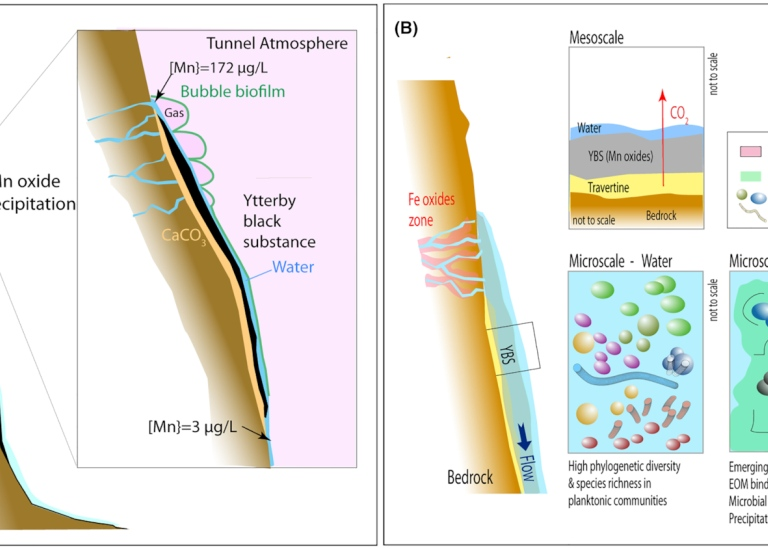 scientific illustration showing biofilm formation and associated metal accumulation in mine tunnels.